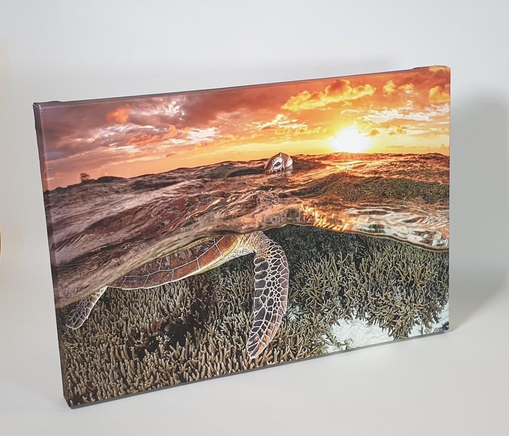 38mm Canvas Print